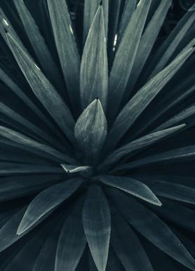 Palms-2397 -Leinwandbild