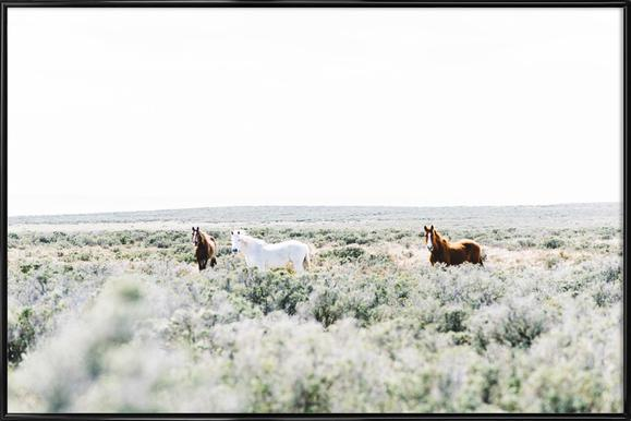 Wild Horses Framed Poster