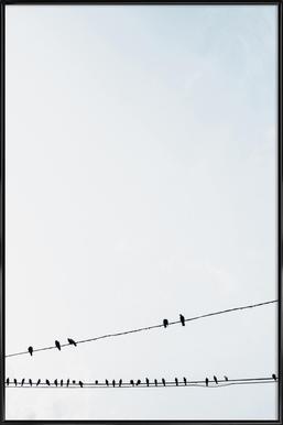 Birds Framed Poster