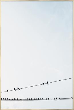 Birds Poster in Aluminium Frame