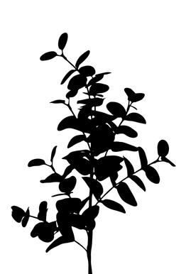 Eucalyptus Bunch Acrylic Print