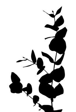 Eucalyptus 2 Acrylic Print