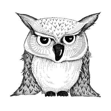 Owl Aluminiumtavla