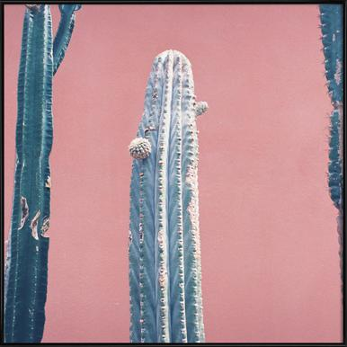 Into the Tropics (Cactus)
