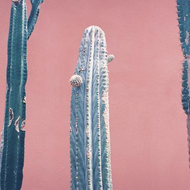 Into the Tropics (Cactus) -Leinwandbild