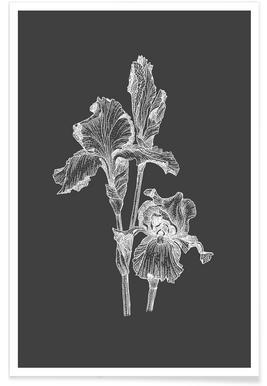 Orchidées - Croquis au crayon affiche