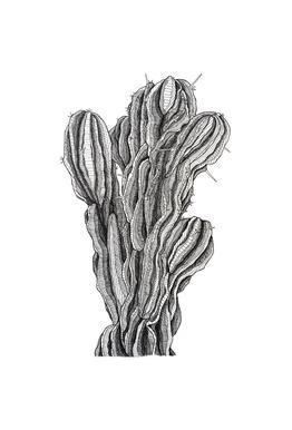 Bush Cactus -Acrylglasbild