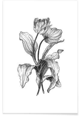 Tulips Pencil Sketch Poster