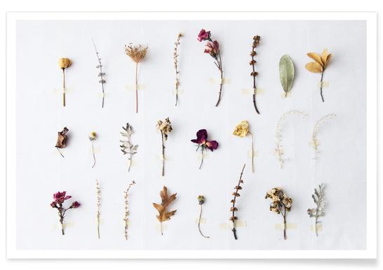 Flora Study - Poster