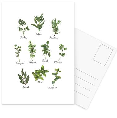 Herbs Collection Postcard Set
