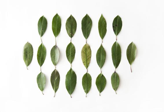 Leaves Collection N2