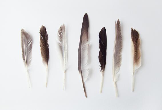 Autumn Feathers
