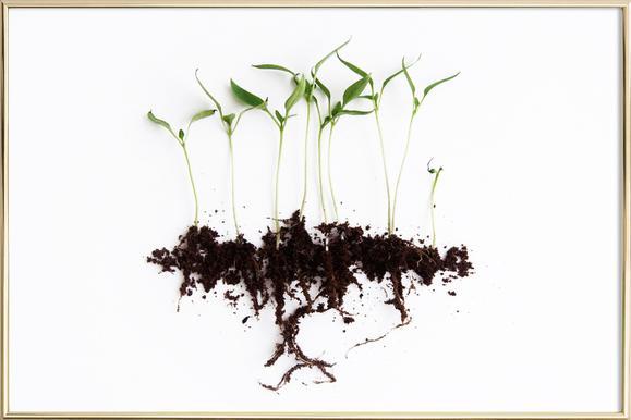 Pepper Sprouts -Poster im Alurahmen