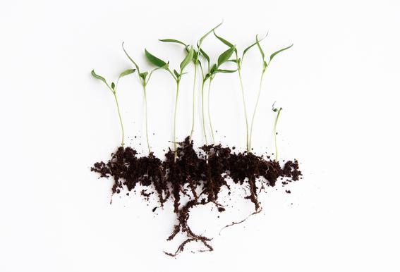 Pepper Sprouts -Alubild