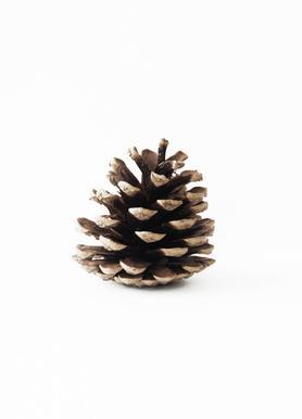 Pinecone N1