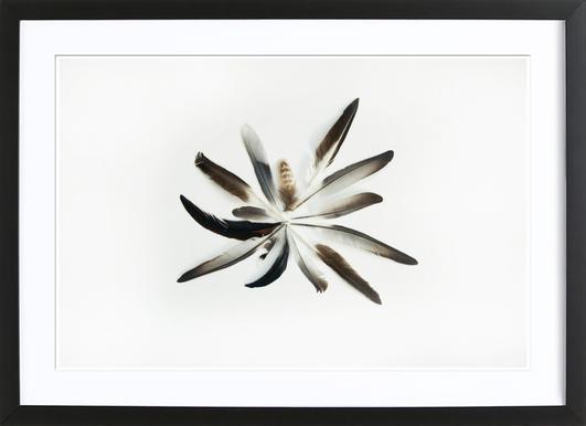 Feathers Circle - Affiche sous cadre en bois