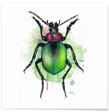 Calosoma Sycophanta -Poster