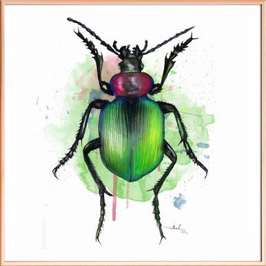 Calosoma Sycophanta -Poster im Alurahmen