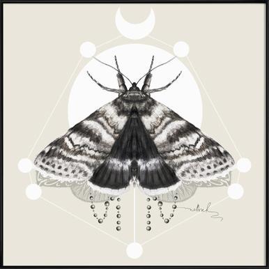 Moth -Bild mit Kunststoffrahmen