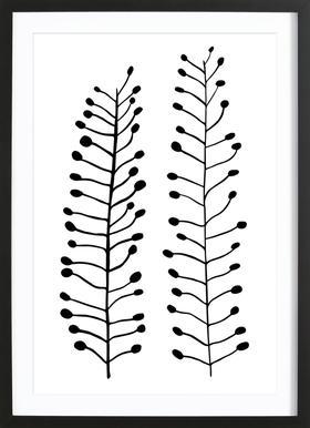 Ackertaeschelkraut Framed Print