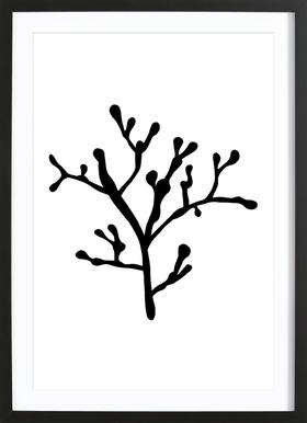 Filigrankoralle Framed Print