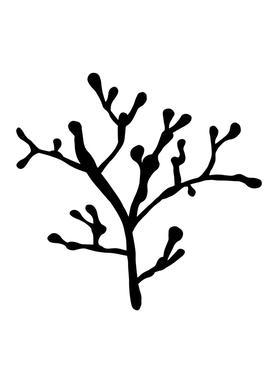 Filigrankoralle -Leinwandbild