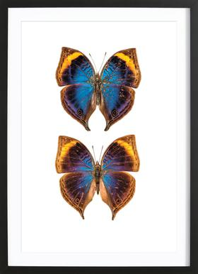 Buterfly Duo