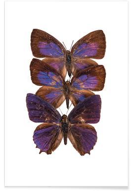 Butterflies -Poster