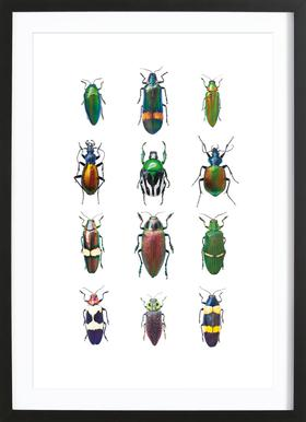Insect 3