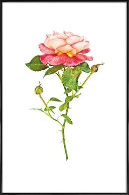 Rose 2 -Bild mit Kunststoffrahmen