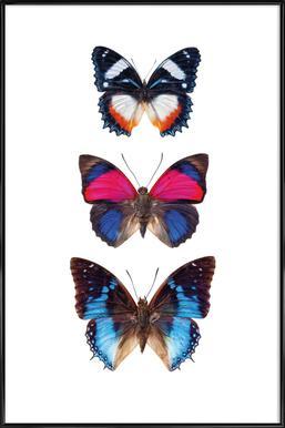 Butterfly 3 ingelijste poster