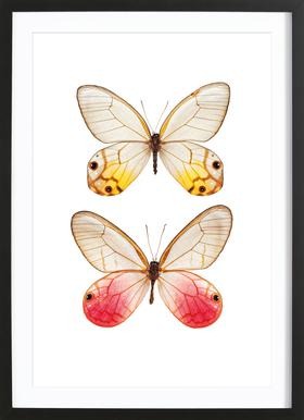 Butterfly 4 - Poster in Wooden Frame