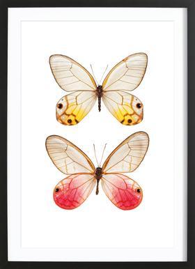 Butterfly 4 Framed Print