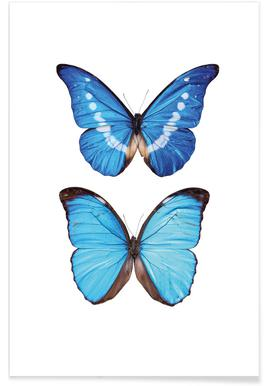 Butterfly 5 - Premium Poster