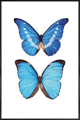 Butterfly 5 - Poster in kunststof lijst