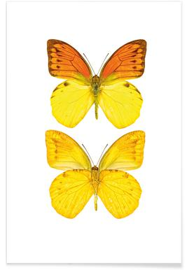 Butterfly 7 - Premium Poster