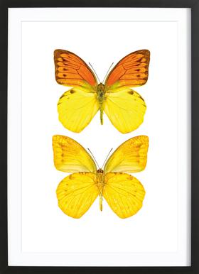 Butterfly 7 - Poster in Wooden Frame