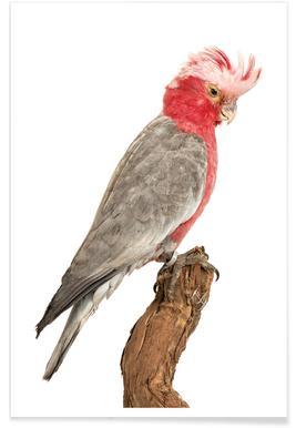 Bird 1 -Poster