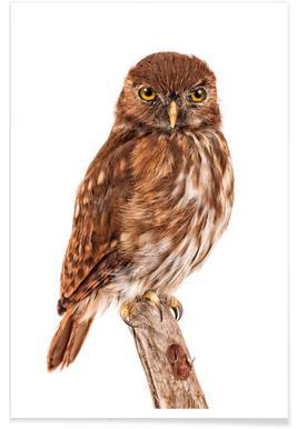 Bird 2 - Affiche