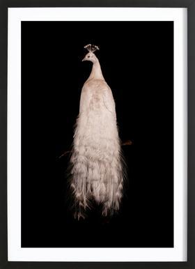 Bird 3 - Poster in Wooden Frame