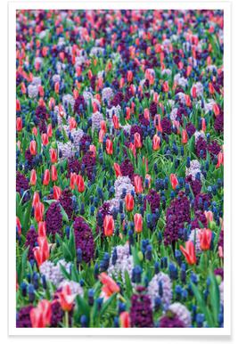Tulip Field Purple -Poster