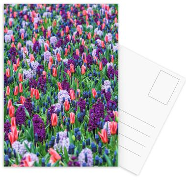 Tulip Field Purple -Postkartenset