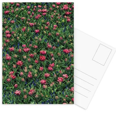 Tulip Field Pink -Postkartenset