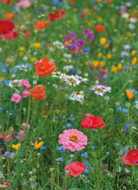 Wild Flowers Field 1 canvas doek