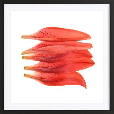 Lilly Petals Orange - Poster in Wooden Frame
