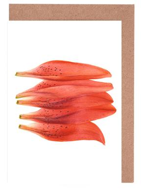 Lilly Petals Orange