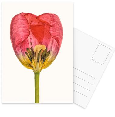 Heart IX Postcard Set
