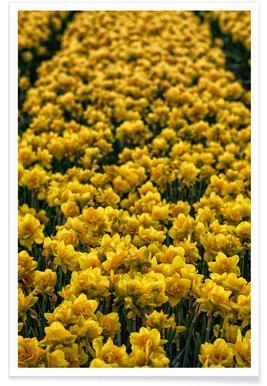 Golden Tulips -Poster
