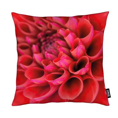 Red Dahlia coussin