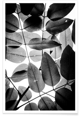 Experiments with Leaves II Poster